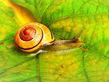 Snail Farm vélemények