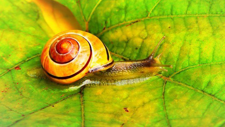 Snail Farm – hol vásárolni, megjegyzések, ára